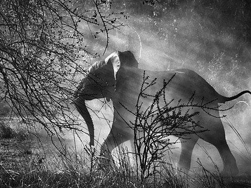Sebastião Salgados New Photography Exhibit, Genesis Today earlier on...xx Beautiful picture and animal. Xx