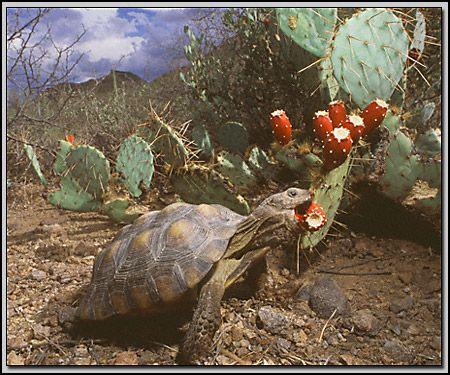 4th Grade Science - Life - Desert Ecosystem