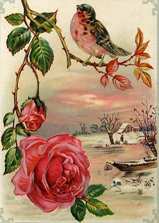 Here's a keeper--A bird on a rose bush in the middle of winter!