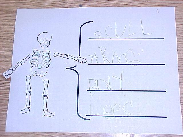 Anatomy summer school