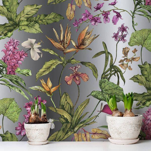 1000 ideas about tropical terrariums on vivarium terrarium and tropical pitchers