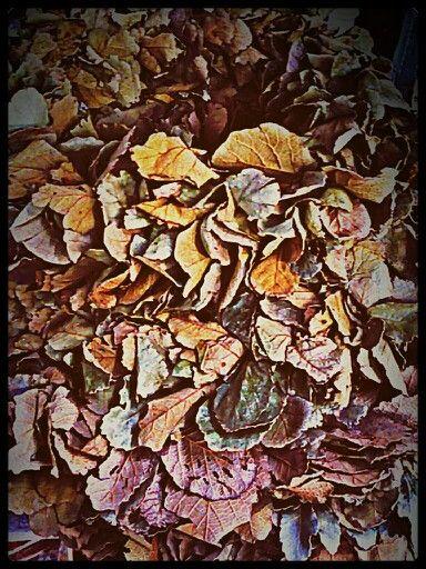 Con el otoño...