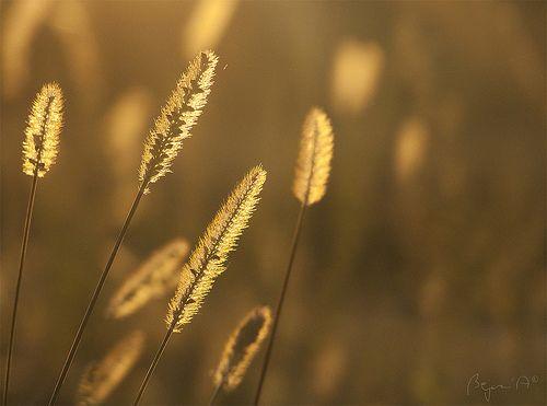 The Last Seeds