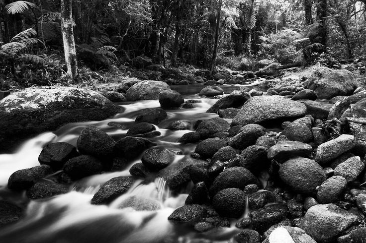 Flowing Creek - Monochrome - Zac Harney Photography