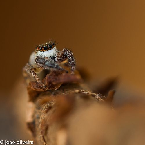 Personal favourites of Macro wold group I