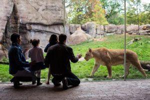 Descubre el zoo virtual con tecnología 7D que te dejará helado