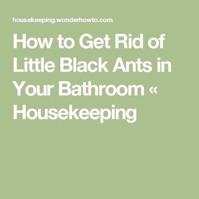 Best 25+ Black Ants Ideas On Pinterest