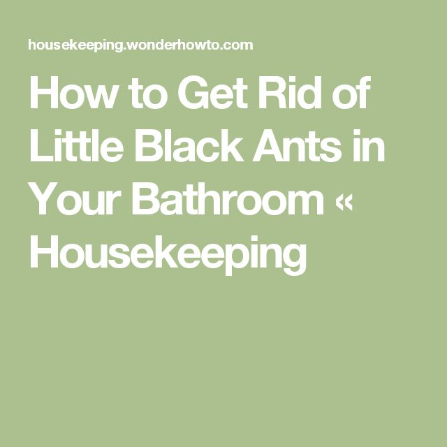 Tiny Ants In My Bathroom: 25+ Best Ideas About Black Ants On Pinterest