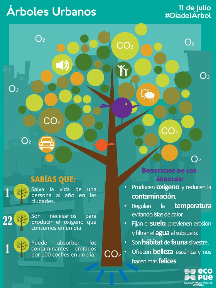 La importancia de los árboles urbanos