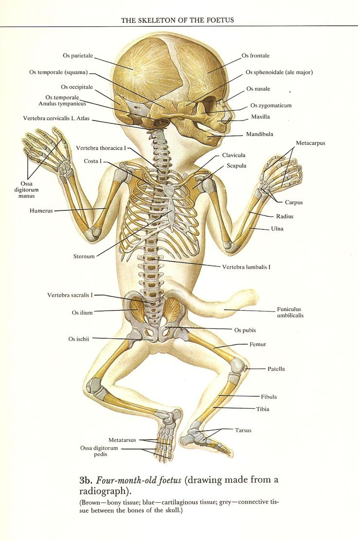41 best Anatomy images on Pinterest | Human anatomy, Human body ...