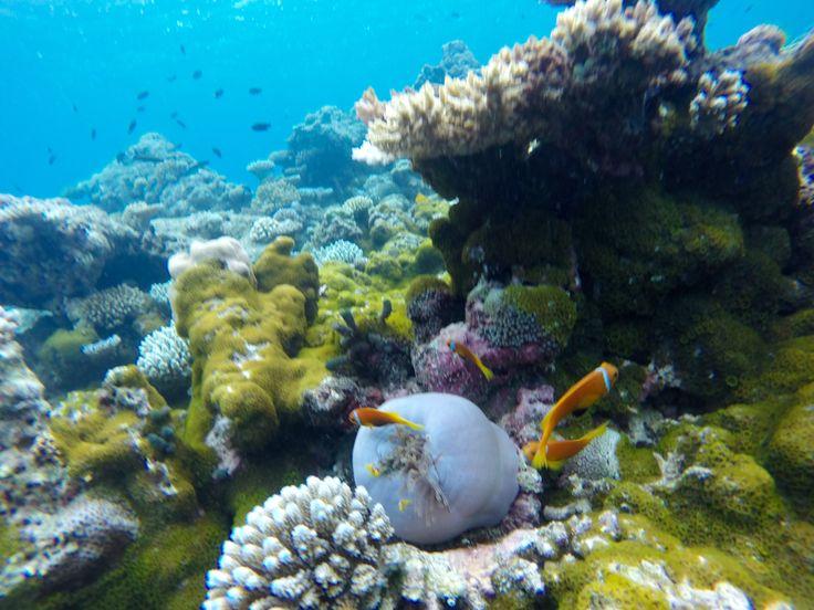 Famous Nemo