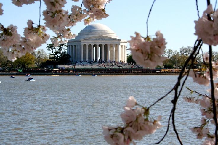 Waszyngton kwitnie na biało i różowo. Fot. radio RMF FM