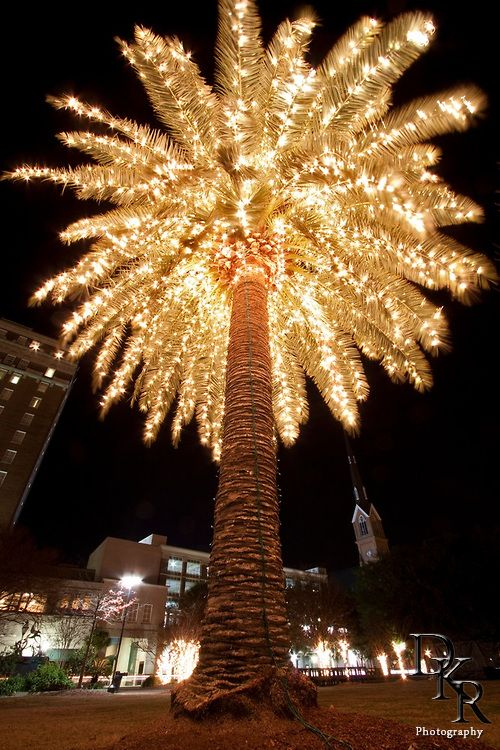 35 Best Christmas Palm Trees Images On Pinterest
