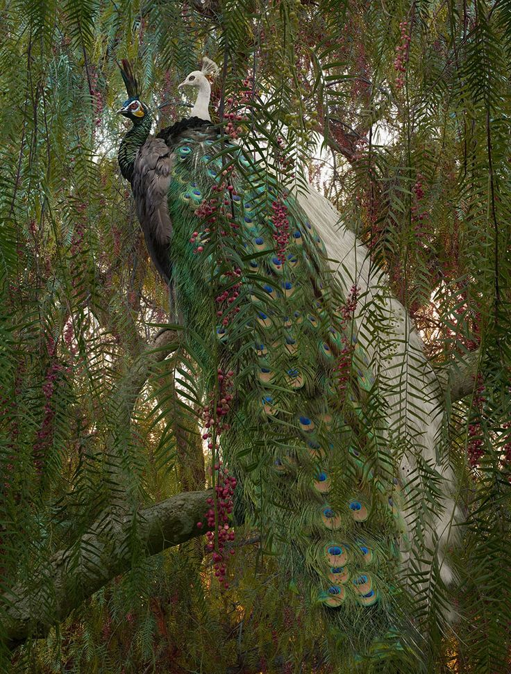 Simen Johan - Incredible! http://proof.nationalgeographic.com/2015/03/11/the-animals-that-live-only-in-our-dreams/