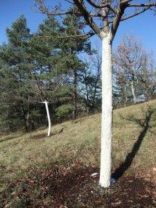 Soigner ses arbres fruitiers pour l'hiver