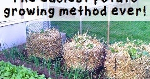 how to make a ball shape out of chicken wire