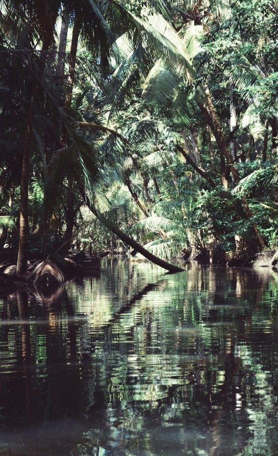 Do You Need A Bucket List Idea- Indian River- Dominica