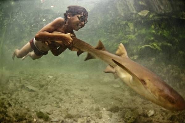 Marine nomad kid hitches a ride on a shark - Boing Boing