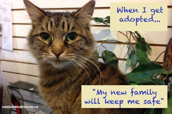 Precious wants to be loved. That's all. oasisanimalrescue.ca