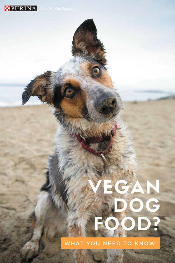 If you're interested in learning more about vegetarian and vegan diets for dogs we've got you covered with a breakdown of vegetarian and vegan dog food information here.
