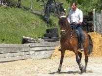 Jinete en un caballo Alter Real