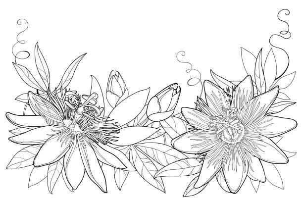 Logo Board Passion Flower Drawings Flower Tattoos