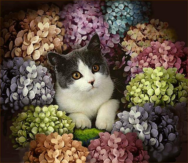 vintage victorian cat