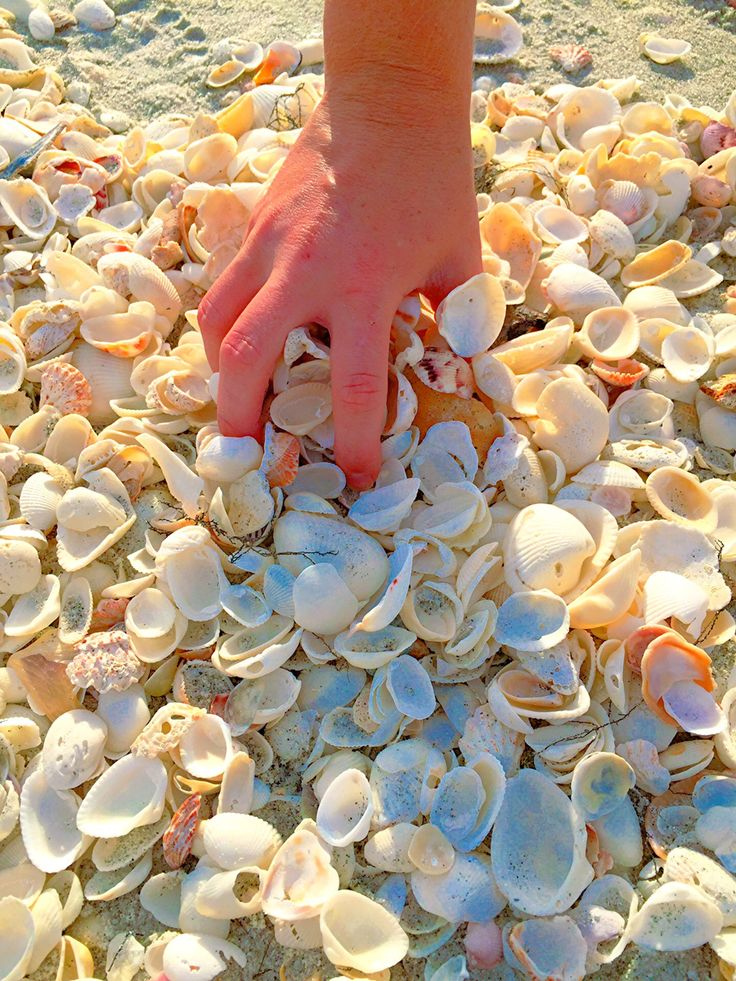 Places to collect Shells on Sanibel Island Florida