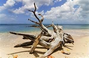 Driftwood in Lotus Cove, Walk on the Beach.