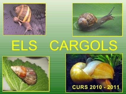 Power cargols by Garrido1, via Slideshare