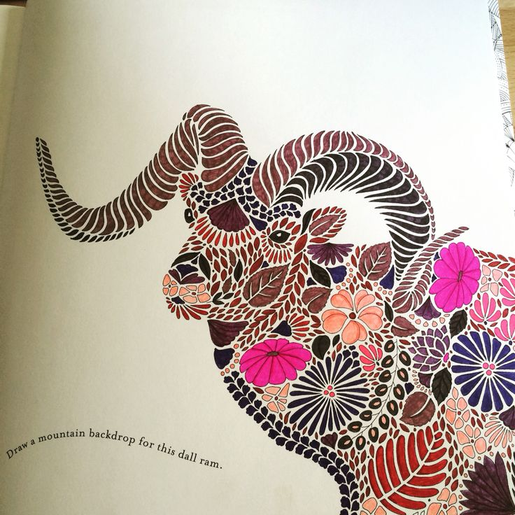 Dall Ram From Millie Marotta Animal Kingdom Colouring Book