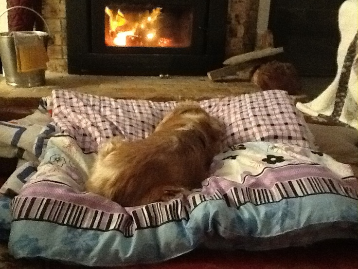 My angel Enzo  Safe and warm in front of the fire!  xxxx