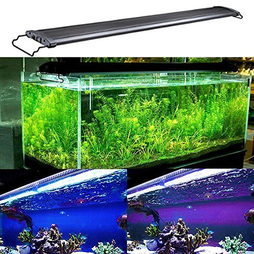 Using Shop Lights For Aquarium: 1000+ Ideas About Aquarium Hood On Pinterest
