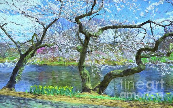Cherry Blossom Trees Of Branch Brook Park 10 By Allen Beatty Cherry Blossom Tree Cherry Blossom Fine Art America