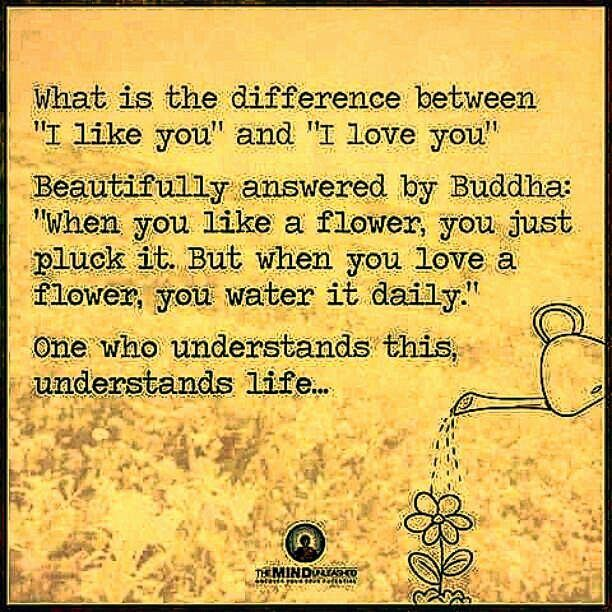 """""""When you like a flower you just pluck it. But when you love a flower you water it daily.""""-#buddha #quotes #love #philosophy #like #wateryourplants #brilliant #treatherright #payattention"""