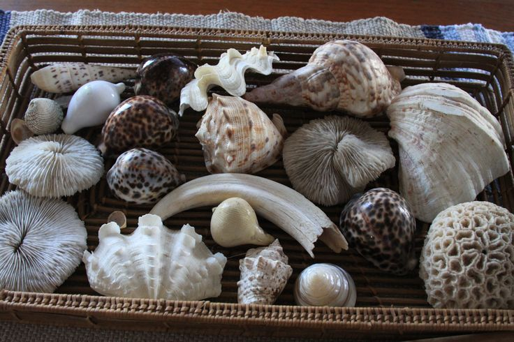 My shell collection at the Beach house. Somehow a warthog tooth slipped in