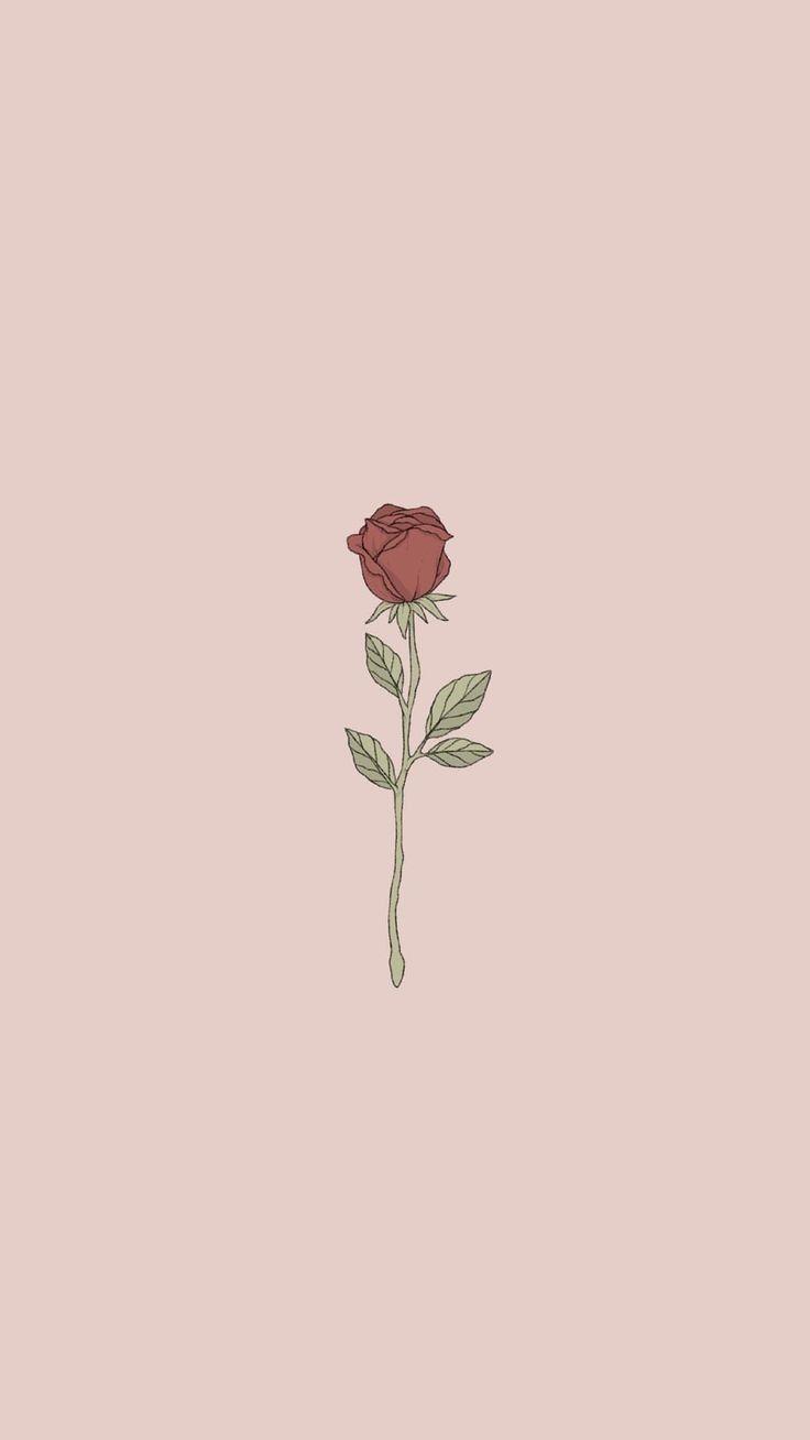 Rose Samira Krasniqi Rose Wallpaper Aesthetic Iphone Wallpaper Locked Wallpaper