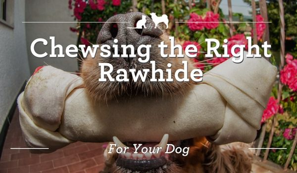 Chewsing the Right Rawhide For Your Dog. When used safely, rawhide treats keep dogs' minds active and their teeth healthy.