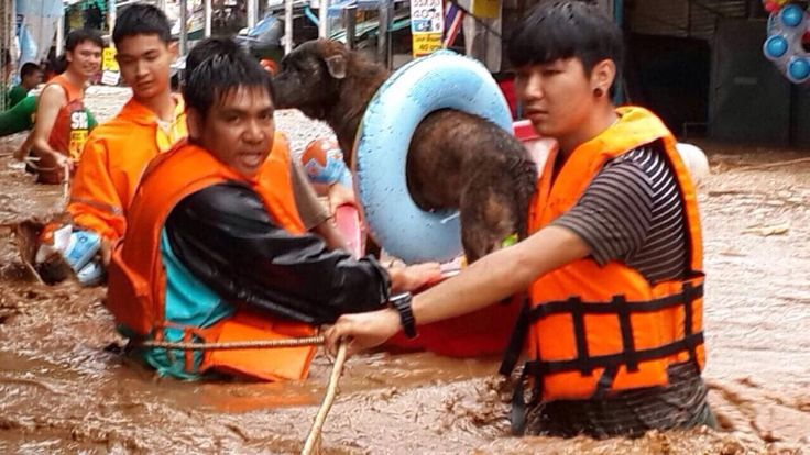flood rescue in Thailand - makeshift life jacket for rescued dog.