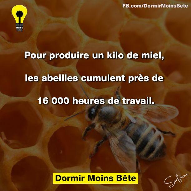 Pour produire un kilo de miel, les abeilles cumulent prés de 16000 heures de travail.