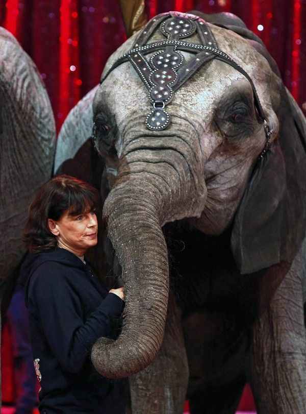 Prinses Stéphanie van Monaco heeft maanden gewerkt aan de veertigste editie van het internationale circusfestival van Monte Carlo. Dat gaat donderdag van start. Stéphanie is niet alleen beschermvrouw van het door haar vader prins Rainier III in 1974 opgezette evenement, maar ook directeur en choreograaf.