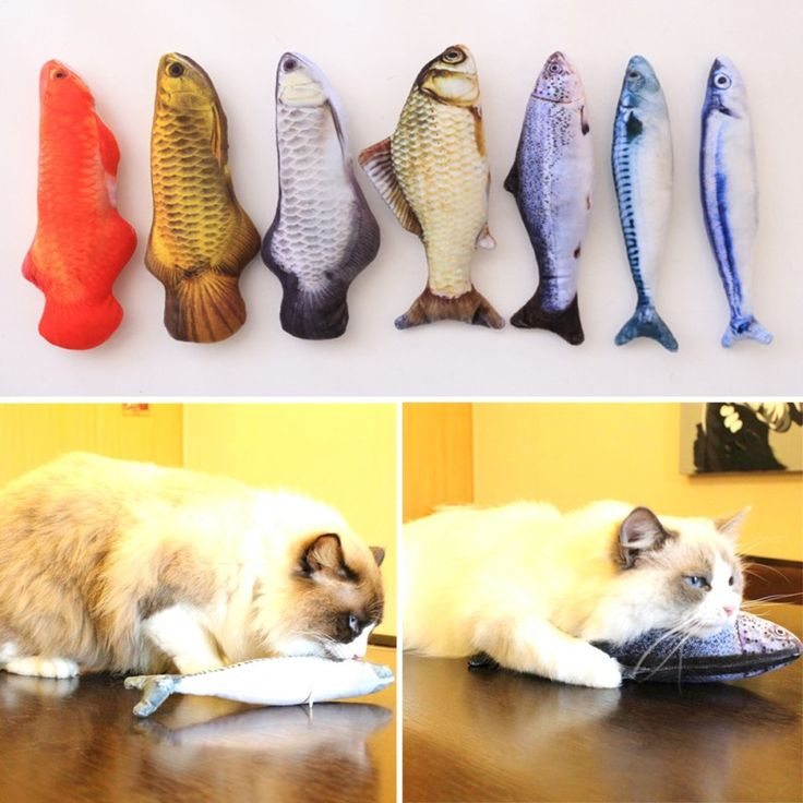 7 Style Catnip Toys for Cat Simulation Fish Pet Kitten Cushion Grass Bite Chew Funny Scratch Pillow 30cm Pet's Padded Toy ~ //Price: $0.00 & FREE Shipping //     #persiancat #persian_cat #cat #cats #catlover #catsofinstagram #catstagram #instacat #cutecat