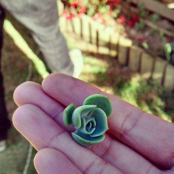 Mini suculenta - Alto de la virgen Guarne