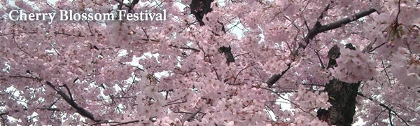 National Mall and Memorial Parks Cherry Blossom Festival.   Festival dates: March 26 - April 10.  Washington D.C.