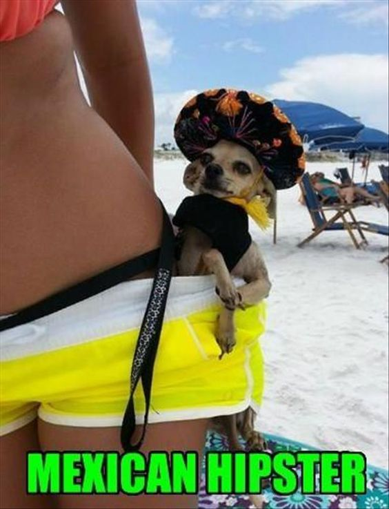 Mexican hipster dog