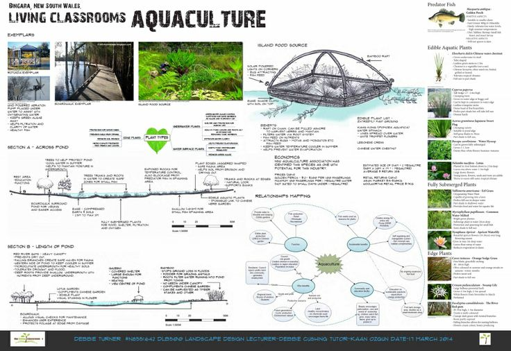 """Bingara """"Living Classrooms"""" Aquaculture Concept - (page 2 of 1) by Debbie Turner Semester 1 2014"""