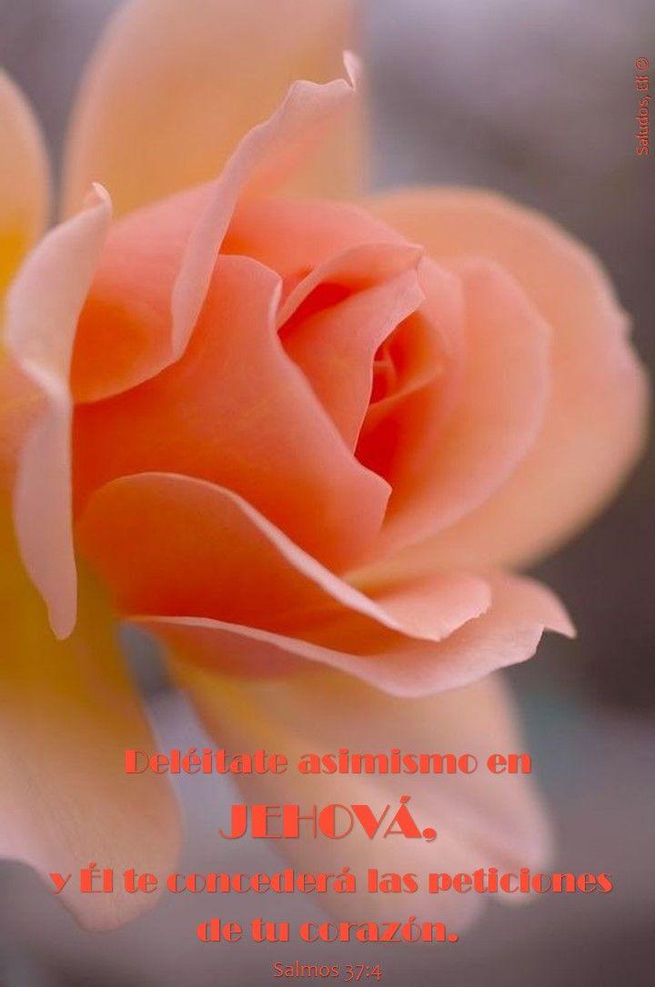 Salmos 37:4-5Reina-Valera 1960 (RVR1960)  4 Deléitate asimismo en Jehová, Y él te concederá las peticiones de tu corazón. 5 Encomienda a Jehová tu camino, Y confía en él; y él hará.