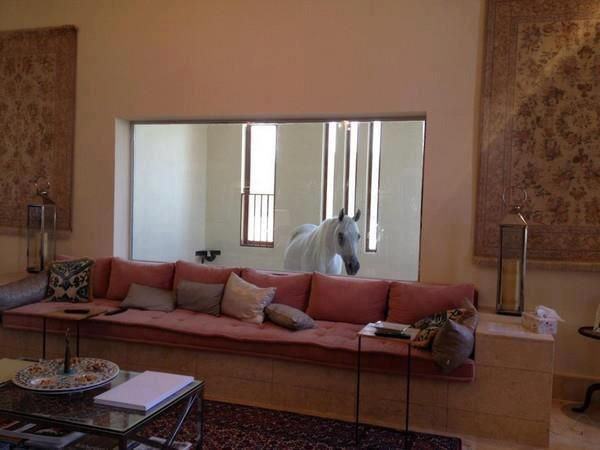 Oh...my....gosh! Why don't I have a house like this?! ...what horse wouldn't enjoy watching TV w his owners?