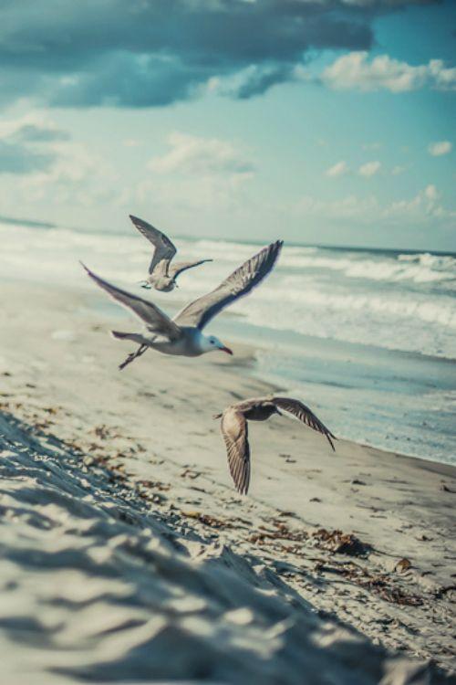 Seagulls flying low, beachside.  http://wetravelandblog.com #travel #photography #freedom