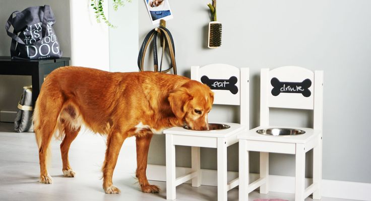 5 ingenious DIYs that your dog absolutely needs